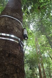 Tree Circumference Dynamics in Four Forests Characterized Using Automated  Dendrometer Bands