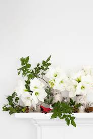 Image Table Country Living Magazine 10 Best Christmas Plants How To Care For Christmas Flowers