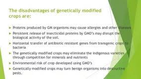 what are the environmental advantages and disadvantages of  advantages and disadvantages of genetically modified foods essay