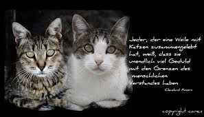 Katzensprüche Katzen Katzen Verrückte Katzen Und Katzensprüche