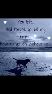 Dog Passing Quotes Gorgeous I Still Miss You Shady Bear Pet Ideas Pinterest Bears