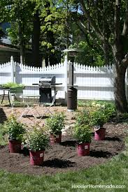 how to design a small rose garden learn how to design and plant your own