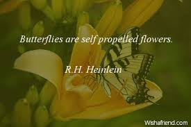 Butterfly Quotes Stunning Butterfly Quotes