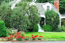 best small trees for front yard best trees for front yard landscaping small trees for front garden apple tree in a front best trees for front yard best