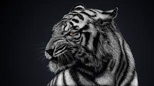 White Tiger 4K Wallpaper #10
