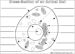 Small Picture Animal Cell Coloring Sheet Cw science animal cell this is the