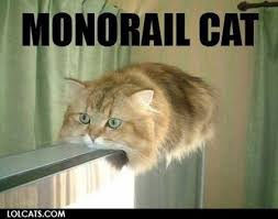 veterinary_memes_monorailcat.jpg via Relatably.com