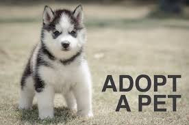animal shelter dogs for adoption. Interesting Shelter And Animal Shelter Dogs For Adoption