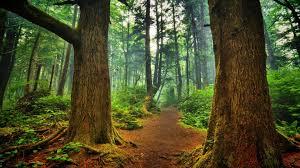 Cool Forest Backgrounds Cool Forest Backgrounds G Nongzico