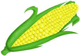 ear of corn clipart. Brilliant Corn Ear Of Corn Clipart At GetDrawings In O