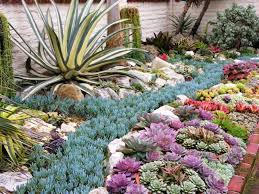 Small Picture Outdoor Succulent Garden Succulent Garden 58 Best DiySucculents