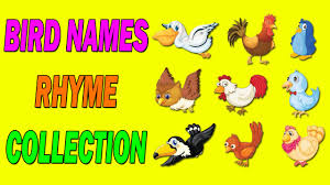 birds names for children in english names of birds for children birds for children to learn you