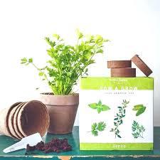 herb garden kit home depot herb growing kit herb garden kit 5 culinary herbal plants to herb garden kit