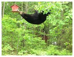 squirrel free bird feeder plans house