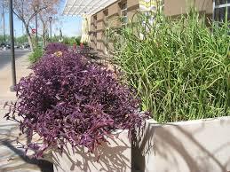 Small Picture Garden Design Garden Design with Your Heart or Mine Desert