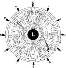 File Iridology Iris Eye Chart Left Mirror Jpg Wikimedia