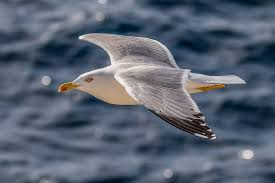 Have We All Missed the Point About Seagulls? �