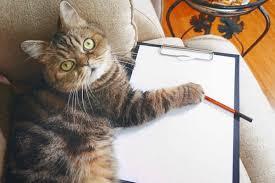 Feliway Cat Travel Tips
