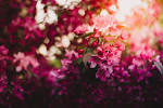 Purple Flowers · Pexels · Free Stock Photos