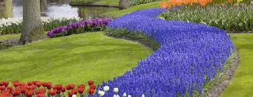 Small Picture Garden Design Garden Design with Growing Tulip Bulbs How To