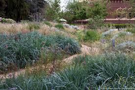 dirt path through california native plants in pollinator meadow garden with native grass leymus condensatus