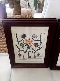 beautiful botanical tulips in solid wood mahogany frames