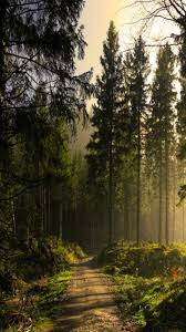 greatest wallpaper forest phone personal reference