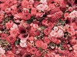 What Different Flowers Mean for Mother's Day (1/9)   Reader's Digest