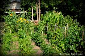 Crop Rotation Chart Vegetable Gardening How To Plan A Vegetable Crop Rotation Hgtv