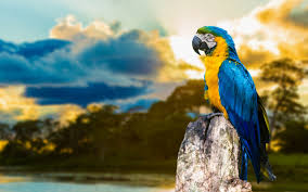 Free download Macaw Parrot HD Wallpaper ...