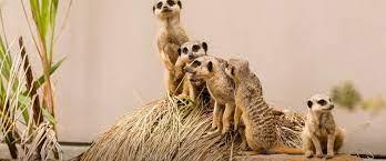 Taronga Western Plains Zoo Dubbo ...