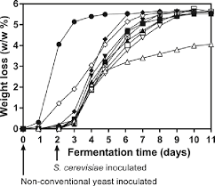 profile of fermentations sequentially inoculated with non conventional yeast species and s cerevisiae the weight loss is shown as percene of the