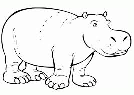 Small Picture Hippopotamus Picture Coloring Home
