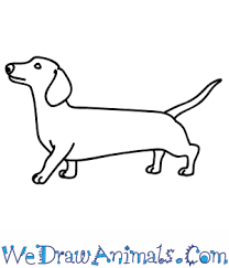 dog drawing easy. Beautiful Dog With Dog Drawing Easy A