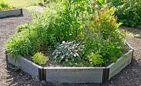how to plant garden. how to grow herbs. herb garden plant e