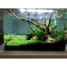 aquarium garden. Brilliant Aquarium Fish Tank Aquarium Plant Seeds Water Aquatic Grass Decor Garden Foreground  To D