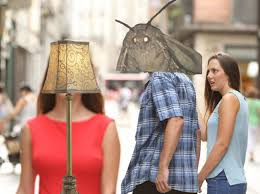 Moth Meme A Top Lepidopterist Dissects The Memes Surprising
