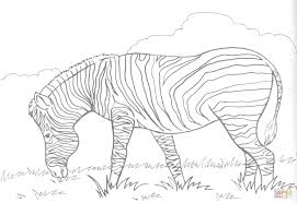 Small Picture Zebra Eats Grass coloring page Free Printable Coloring Pages