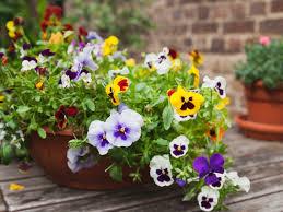 5 fabulous plants for spring container