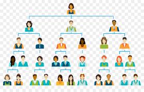Organization Chart Vector Education Background