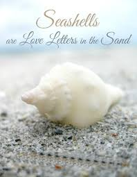 sea shell quotes sea shells are love letters in the sand beach quotes