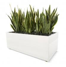 office planter. office planter i