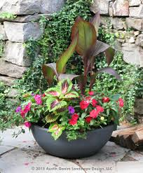 Small Picture This container garden mixes a combination of Canna Coleus and