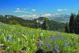 s wildflowers of the high sierra with julie carville thursday july 18 2019 6 7 30pm inn town campground 9 kidder court nevada city ca 95959