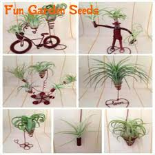 office plants for sale. Perfect Plants 2016 On Sale 20 Pcs Colorful Mexican Air Plants Seeds In Sea Shell  Terrariums For Throughout Office Sale