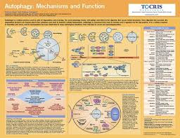 Science Research Posters Life Science Posters Tocris Bioscience