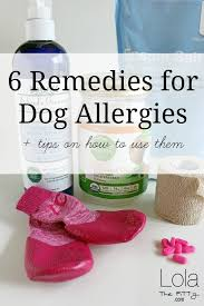 6 Remedies for Dog Allergies | Lola the Pitty