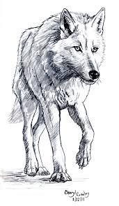 Wolf Drawing Google Zoeken Kresba Kresby Tužkou Tetování Vlka