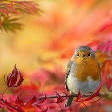 Autumn bird | Beautiful birds, Pet birds, Pretty birds