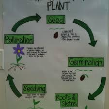 Plant Life Cycle Flow Chart Reka Mughillain Mughillain On Pinterest